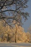 Il paese delle meraviglie forte di inverno del parco della collina Fotografie Stock