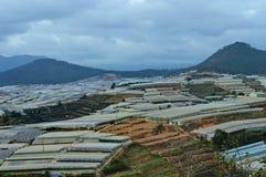 Il paese delle meraviglie orticolo messo nelle montagne fotografie stock libere da diritti