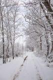 Il paese delle meraviglie tranquillo di inverno Immagini Stock Libere da Diritti