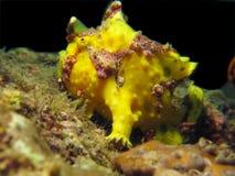 Il pagliaccio subacqueo Fotografia Stock