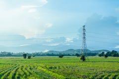 Il palo ed il riso ad alta tensione coltivano con il cielo nuvoloso Immagini Stock Libere da Diritti
