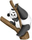 Il panda riguarda l'albero Fotografia Stock