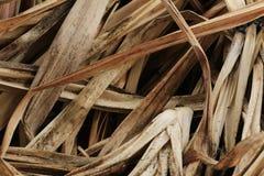 Il Pandanus ha asciugato le foglie Fotografia Stock Libera da Diritti