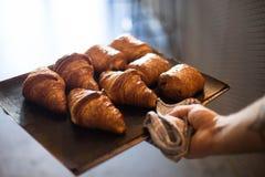 Il panettiere tiene il vassoio con i croissant in forno per panetteria fotografie stock libere da diritti