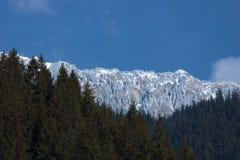 Il panorama dei picchi di montagna e la foresta della conifera nell'inverno condicono Fotografie Stock