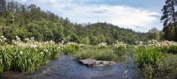 Il panorama di Cahaba Rive in primavera Fotografia Stock