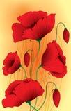 Il papavero fiorisce le piante Immagine Stock