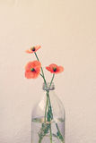 Il papavero fiorisce in un vaso di vetro della bottiglia per il latte Fotografie Stock Libere da Diritti