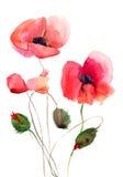 Il papavero stilizzato fiorisce l'illustrazione Immagine Stock