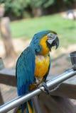 Il pappagallo fotografia stock