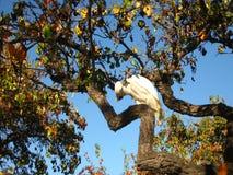 Il pappagallo immagine stock