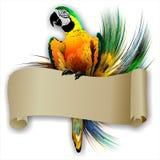 Il pappagallo con un rotolo vuoto su un fondo astratto. (Vettore) Royalty Illustrazione gratis