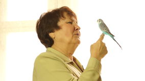 Il pappagallo di pappagallino ondulato si siede sulle mani stock footage