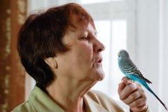 Il pappagallo di undulatus del Melopsittacus di pappagallino ondulato si siede sulle mani di w immagini stock