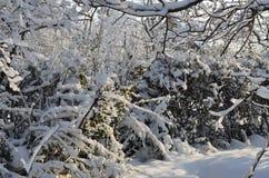 Il parco è coperto di neve fotografia stock libera da diritti