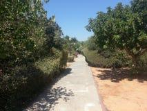 Il parco in anana del ` del Ra, Israele Fotografia Stock Libera da Diritti