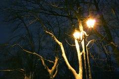 Il parco dell'inverno, illuminazione di notte, accende splendendo, la neve sui rami, la magia dell'inverno, un giardino di invern Fotografie Stock Libere da Diritti