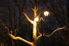 Il parco dell'inverno, illuminazione di notte, accende splendendo, la neve sui rami, la magia dell'inverno, un giardino di invern Fotografia Stock Libera da Diritti