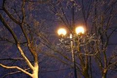 Il parco dell'inverno, illuminazione di notte, accende splendendo, la neve sui rami, la magia dell'inverno, un giardino di invern Immagine Stock