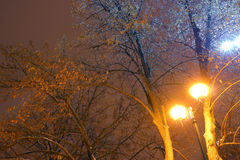 Il parco dell'inverno, illuminazione di notte, accende splendendo, la neve sui rami, la magia dell'inverno, un giardino di invern Immagini Stock