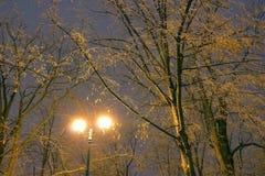 Il parco dell'inverno, illuminazione di notte, accende splendendo, la neve sui rami, la magia dell'inverno, un giardino di invern Fotografie Stock