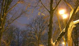 Il parco dell'inverno, illuminazione di notte, accende splendendo, la neve sui rami, la magia dell'inverno, un giardino di invern Fotografia Stock