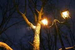 Il parco dell'inverno, illuminazione di notte, accende splendendo, la neve sui rami, la magia dell'inverno, un giardino di invern Immagine Stock Libera da Diritti