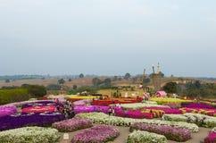 Il parco della flora di vista del paesaggio Fotografia Stock