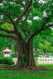 Il parco di Chatuchak è un parco nel cuore della capitale tailandese, situato a Bangkok Fotografia Stock Libera da Diritti