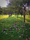 Il parco di Lumpini, vita è breve caduta di simili Fotografia Stock Libera da Diritti