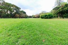 Il parco e l'erba del landscap in città Fotografia Stock