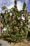 Il parco municipale nella provincia Malaga Andalusia Spagna di Marbella fotografia stock libera da diritti