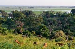 Paesaggio del parco nazionale di Chobe Fotografia Stock