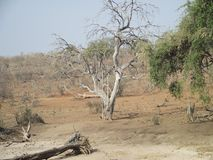 Il parco nazionale stupefacente di Chobe Fotografie Stock Libere da Diritti
