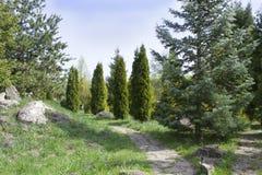 Il parco verde con una vista dei cespugli verdi Immagini Stock
