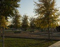 Il parco vuoto con gli alberi Fotografia Stock
