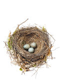 Il particolare del merlo eggs in nido isolato su bianco Fotografia Stock
