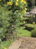 Il passaggio pedonale nel giardino fotografia stock libera da diritti