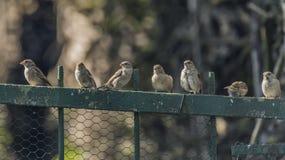 Il passero che si siede sopra recinta la foresta Fotografie Stock