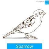 Il passero impara il vettore educativo del gioco degli uccelli illustrazione di stock