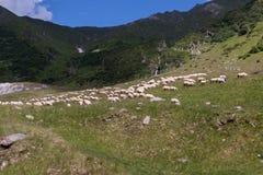 Il pastore Immagine Stock