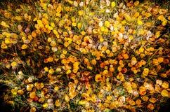 Il pavimento della caduta Fotografie Stock Libere da Diritti