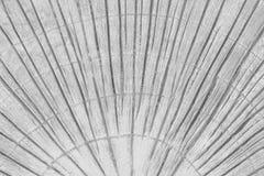 Il pavimento di calcestruzzo grigio in foglie di palma ha stampato la struttura dei modelli su fondo fotografia stock libera da diritti