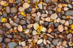 Il pavimento di pietra sporco del primo piano con le foglie secche struttura il fondo Fotografie Stock
