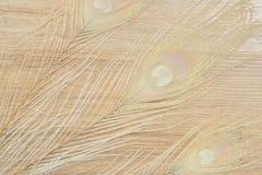 Il pavone dell'albino mette le piume al fondo Immagini Stock Libere da Diritti