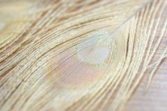 Il pavone dell'albino mette le piume al fondo Fotografie Stock