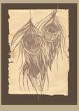 Il pavone di vecchio stile mette le piume alla scheda Fotografia Stock
