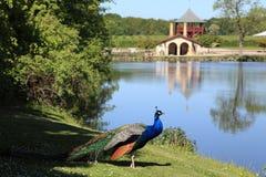 Il pavone, il giardino ed il lago a Egeskov fortificano fotografia stock libera da diritti