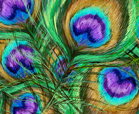 Il pavone mette le piume all'illustrazione Fotografie Stock