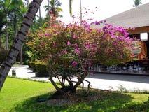 Il pavone si è nascosto dal sole sotto rododendro fotografia stock libera da diritti
